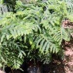 Crismas Tree